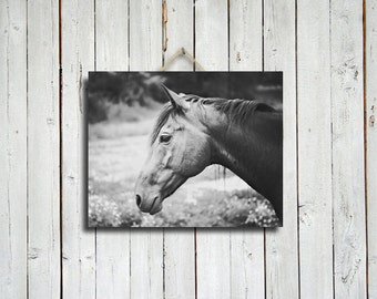 About a Horse - Canvas  - black and white horse photography - horse photograph - horse photo - horse decor - black and white photo
