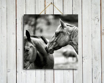 Comfortably familiar - 10x10 Canvas - Black and white horse art - Black and white decor - Horse wall art.