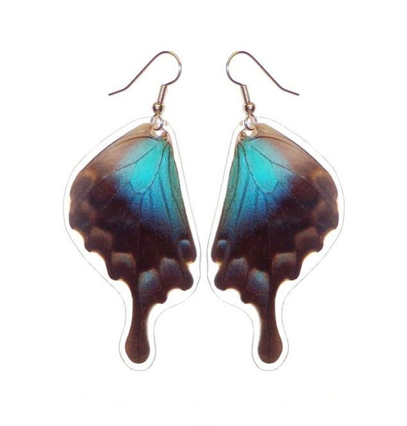Real Butterfly Wing Earrings - Papilio Pericles Bottom Wing