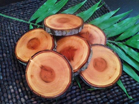 Set of 6 - FANTASTIC Mahoghany Tree Coaster slices