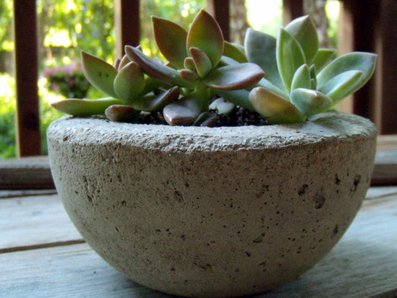 Succulent Garden in Concrete Bowl