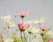 Cosmos- Flower Photography- Cosmo Flowers Photo- Pink, Blue, White- Pastel Colors- Floral Art- 8x8 Fine Art Print