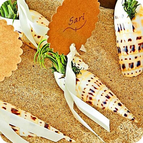 Items similar to artemis shells air plant seashells for Artemis decoration