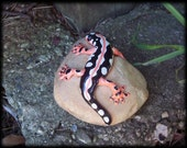 Neurergus kaiseri, Spotted Newt, hand sculpted and painted, critter on a rock