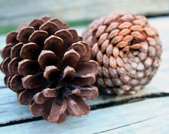Large Naturally Harvested Pinecones