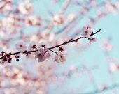 Cherry Blossom Photography sakura botanical photo nature spring macro photograph pink blue sky teal wall art photography