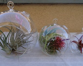 "3 Pack-Assorted Round Glass Plant Orb/Terrarium 8"", 5.5"", and 4.5"" W/ Plants"