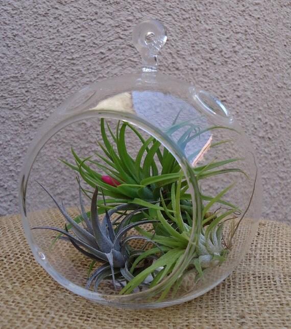 "4.5"" Glass Plant Orb/Terrarium Kit."