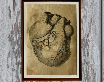 Heart Anatomy print on old paper Antiqued decoration AK355