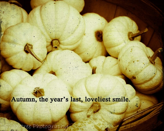 White Pumpkins Fall Autumn Halloween Vintage Feel October Harvest Mini Pumpkin Fall Quote Sepia Tones, Fine Art Print