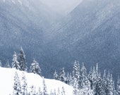 Winter Landscape, Olympic National Park, Snow, Winter, Nature, Forest  Wall Art, 8 x 10 Photography,
