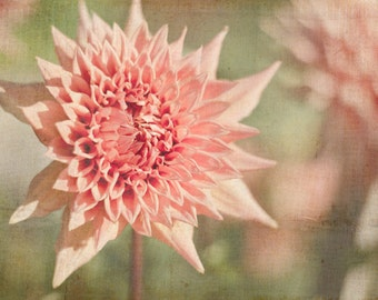 Peach Flower Photography, Nature Wall Decor, Dahlia Photo, Bedroom Art, Pink and Green Picture, Floral Photograph