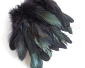IRIDESCENT Black Coque rooster tail feathers, strung, millinery supply, jewelry making, craft feather / 3-6 inches(7.5-15 cm) long / F56-3