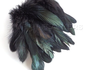 IRIDESCENT Black Coque rooster tail real feathers, strung, millinery supply, jewelry making, craft feather / 3-6 in (7.5-15 cm) long / F56-3