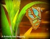 A'Nena Original Photo Print Butterfly Bat Napping