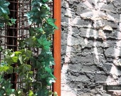 "Soho Garden Graffiti Building Metal Trellis Urban New York City Wood Summer Diptych (4"" x 6"" Fine Art Photo Print)"