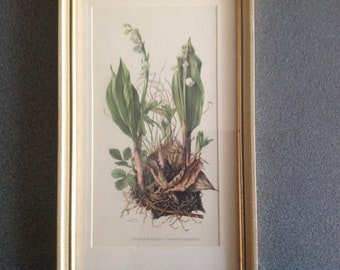 Vintage  framed print  Lily of the valley