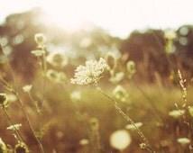 summers light, field, wild, flowers, nature, fine art photography