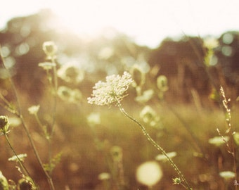 summers light, field, wild, flowers, nature, fine art photography