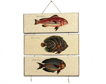 "Retro Wood Wall Art 14x12"" 36x30 cm, Fish Educational Board, MDF Board, Wall Hanger, Art Deco Room Decor, Shabby chic, Nursery room art"