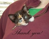 Rescue kitten thank you card with envelope, Scooter, 100% charity item