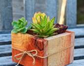 "5x5"" Succulent Planter Box - Redwood - great for centerpieces."