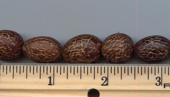 Christmas Palm Seed beads (5)