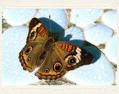 Strikingly Patterned Buckeye Butterfly handmade photo note card