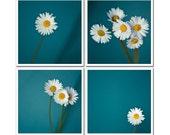 Original Art Photographs, Daisy Flower Photography, Set of Four Canvas or Photo Paper Fine Art Prints Daisy 4x4, blue