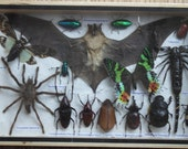 REAL Multiple INSECTS BEETLES Bat Spider Butterflies Collection in wooden box /is08q