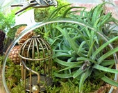 Swallow and Bird Cage Air Plant Terrarium - A Perfect Birthday or Valentines Day Gift