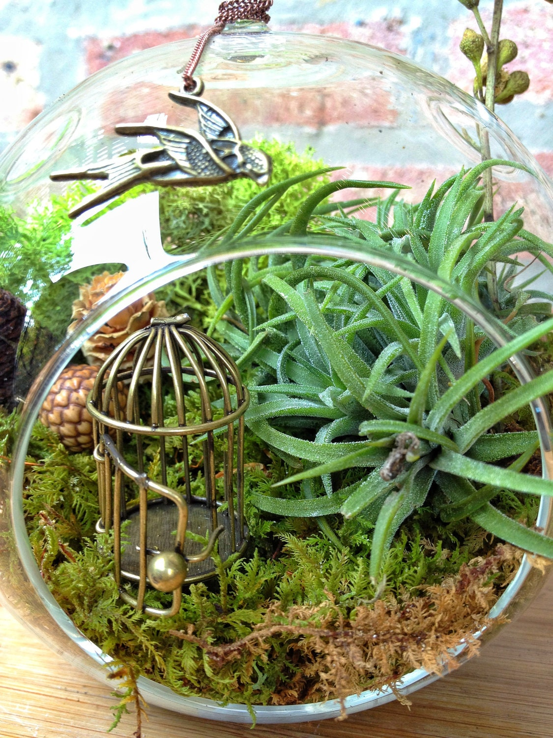 Swallow And Bird Cage Air Plant Terrarium A Perfect Birthday