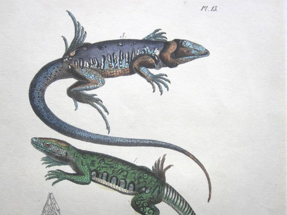 Antique  French Lithograph of Lizards
