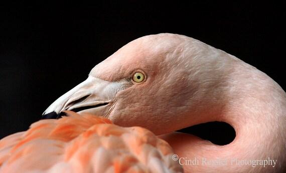 Photography, Flamingo, Bird, Birds, Bird Lover Gift, Nature Lover, Photo, Fine Art, Housewarming Gift, Living Room Decor, Office Decor, Gift