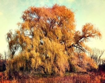 Tree photograph, Willow Tree, Fall colors, Vivid orange leaves, Fall colors photo