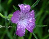Purple flower photography with summer rain droplets high resolution download fast delivery no shipping charges