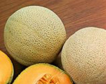 Hales Best Jumbo Cantaloupe Heirloom Melon Seeds Non GMO