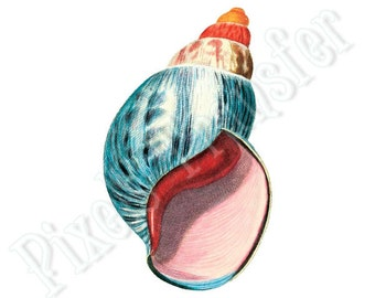 SEASHELL Instant Download, Digital Downloads, large digital image, blue pink orange illustration 128