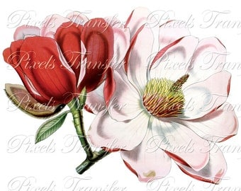 MAGNOLIA Digital Downloads Instant Download collage sheet pink wedding clipart 170