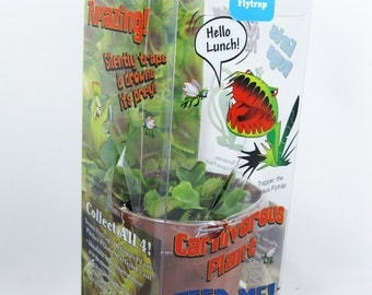 Live Venus Fly Trap - CARNIVOROUS DIONAEA - Free Shipping / Gift Box - Nice Gift