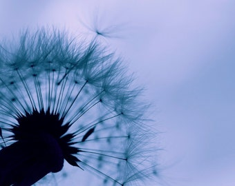 Dandelion photo Instant Download Fine Art Photography dandelion seeds make a wish dandelion art print