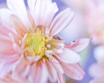 Pastel Flower photo Digital Download Girls room decor Nursery wall art Fine Art Photography pink peach blossom