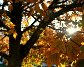 breakthrough // Overland Park, KS // Fall // Autumn // tree // leaves // sun // yellow // nature // fine art print // 8x10