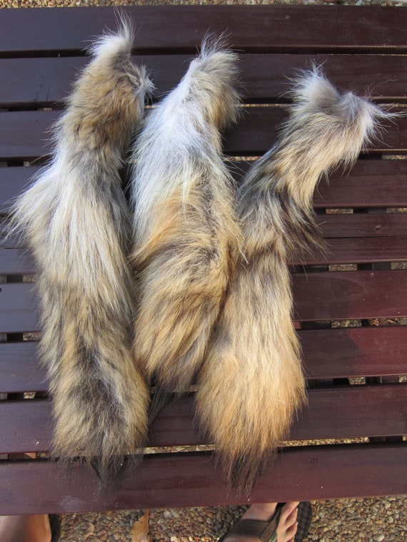 Coyote Tail Real Taxidermy Tail Fur Crafts