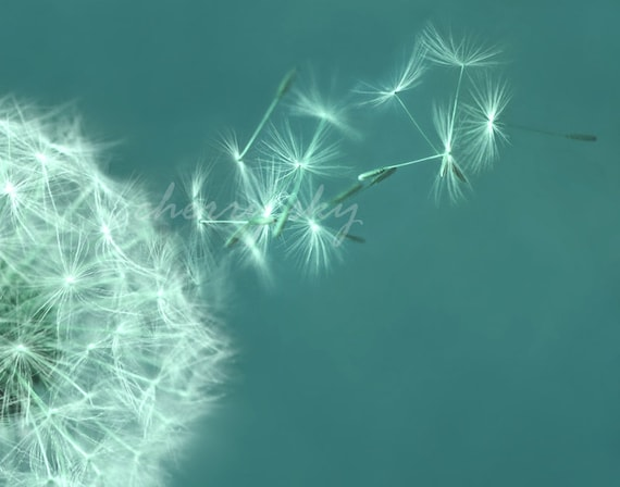 items similar to make a wish 2 dandelion flower soft