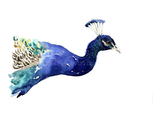 Peacock Watercolor Painting, Art Print- Limited Edition , Giclee