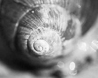 Snail shell Black and White photo, fine art photograph, bokeh