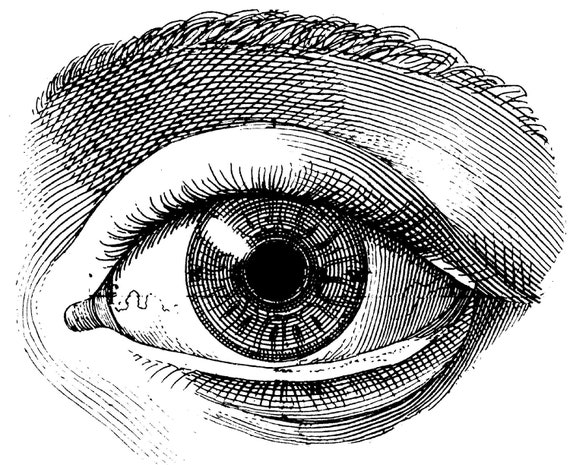 The human eye Old medical atlas illustration Digital Image