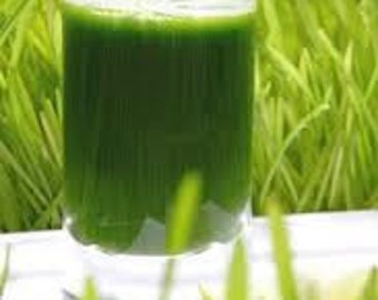 BULK, 500 Seeds, Grow your own Wheatgrass, Healthy, Organic, Wheat Grass