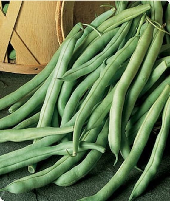 how to prepare stringless beans
